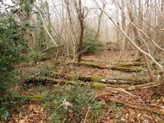 16 ans après, il ne reste plus que les troncs de ces merisiers abattus par l'ouragan.